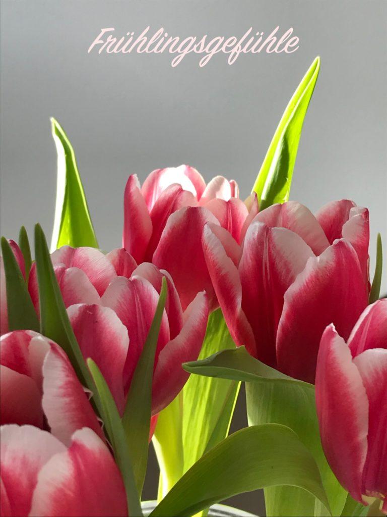 Frühlingsgefühle dank Tulpen