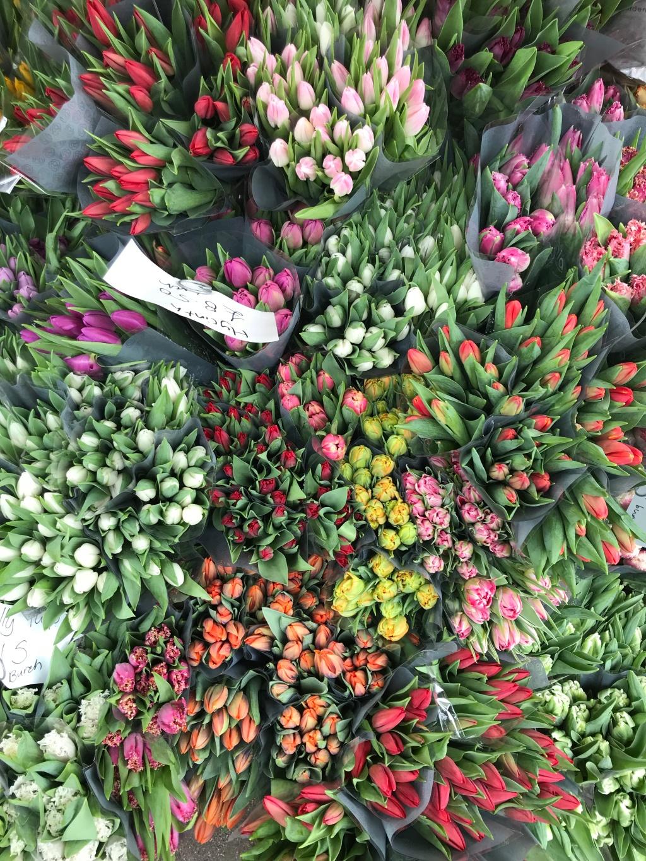 Tulpen Frühlingsgefühle